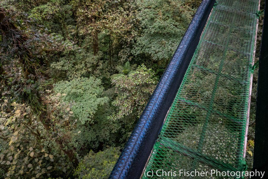 Hanging Bridge at Las Heliconias Rainforest Lodge, Bijagua, Costa Rica