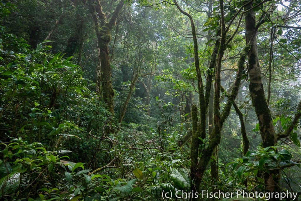 Las Heliconias Rainforest Lodge, Bijagua, Costa Rica