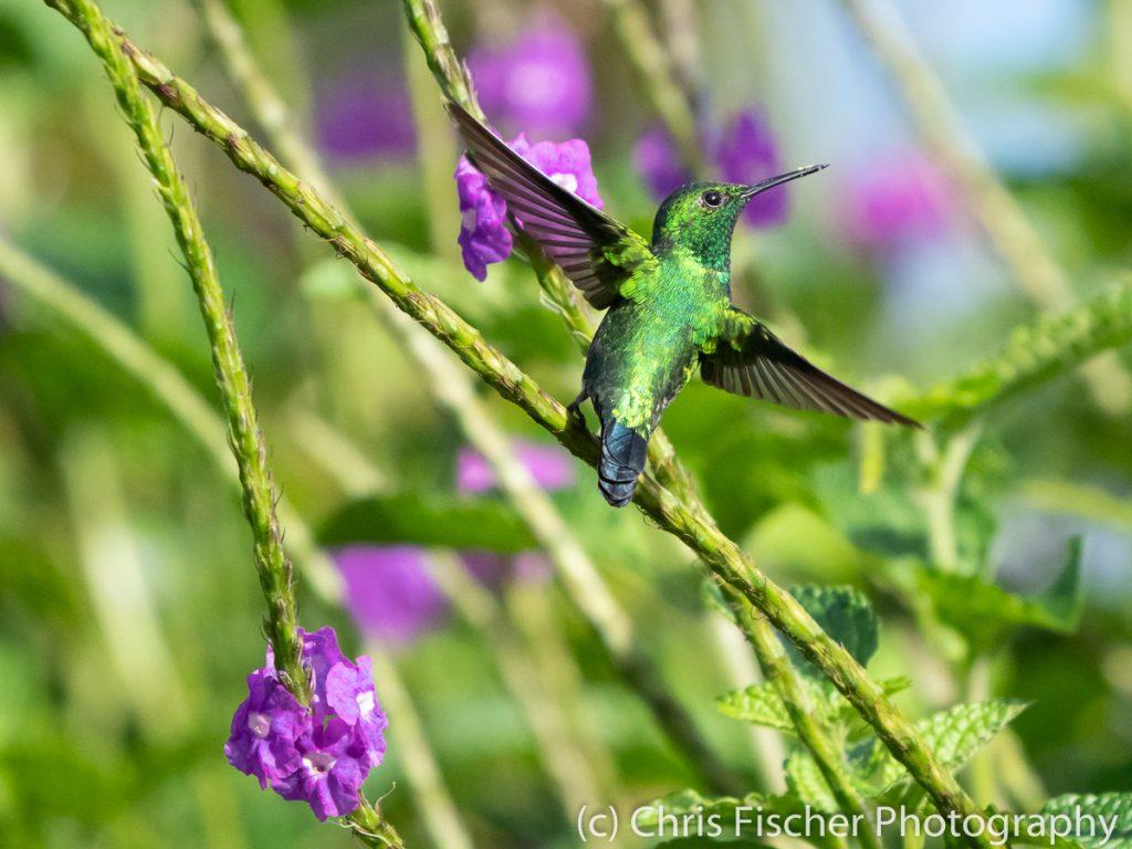 Garden Emerald, Quizarrá, Costa Rica
