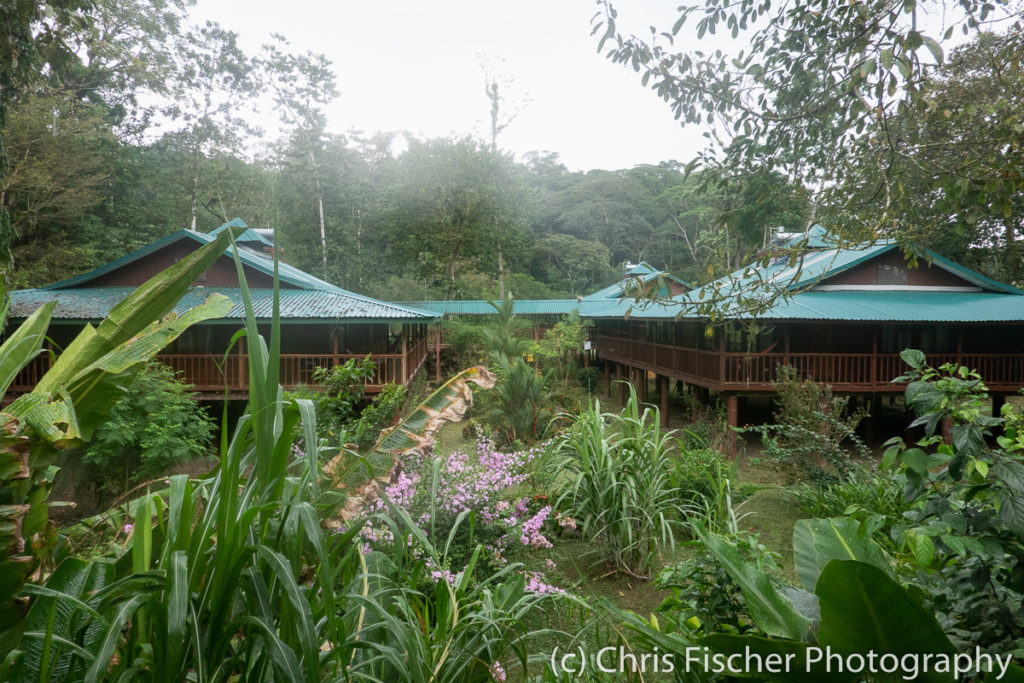 Selva Verde Lodge, Sarapiquí, Costa Rica